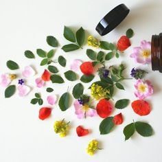 #cosmeticavegana #ecoblogger #vidasustentable Fresco, Pure Essential Oils, For Your Health, Natural Medicine, Beauty Care, Aromatherapy, Plant Based, Benefit, Healing