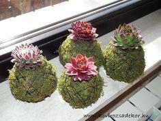 Sempervivum kokedamas Succulents, Herbs, Plants, Gifts, Decor, Presents, Decoration, Succulent Plants, Herb