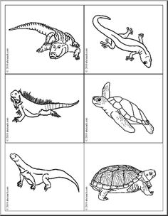 Reptile and Amphibian Picture Flashcards. Identify the animals, print out two copies to create a matching came. Color, cut and play.#flashcards @animals #amphibian #reptiles