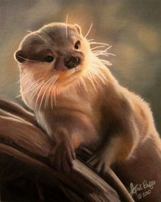 Pastel Drawing Otter Wildlife Fine Art Print by autumnlaneartistry, $25.00