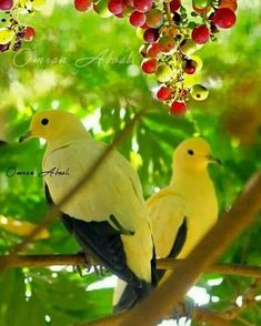 Pretty Birds, Beautiful Birds, Animals Beautiful, Cute Animals, Dove Pictures, Bird Pictures, Nature Pictures, Tropical Birds, Colorful Birds