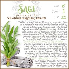 "The velvety leaves of this flavorful herb are unmistakable, & Sage is a vital part of any kitchen witch's seasoning stash. Its essential oil is often labeled ""Dalmatian Sage oil."" // #kitchenwitch #herbalmagick #sage #savory #herb #magick #protection #healing #cleansing #wish Hedge Witch, Kitchen Witchery, Book Of Shadows, Savoury Dishes, Healer, Sage, Herbalism, Wiccan, Magick"