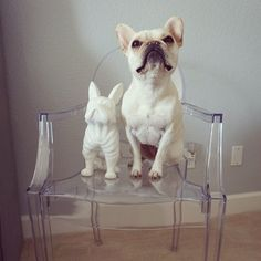 Can you tell them apart? @_remythefrenchie found her twin: our French Bulldog Coin Bank!