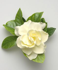 The wonderful gardenia...the base scent of Aesthetic Content's Giardino Blossom Luxury Scented Soy Candle