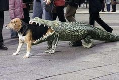 Costume for your dog