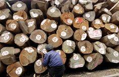 timber | teak | superyacht teak decking | business News on SuperyachtNews.com
