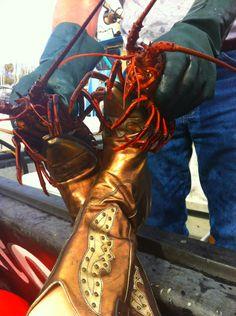 Cowgirl, makin' friends with the lobster fishermen....HA!  Santa Barbara, California! 2 much fun!