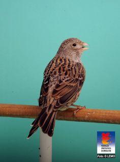 Birds, Animals, Female Singers, Fluffy Animals, Draw, Nature, Recipes, Leopard Cat, Beautiful Birds