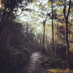Morning bush walk