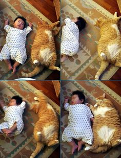 Huge Kitty & a Baby (This will no doubt be Merlin in a few years...)