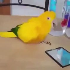 Best Pic parrot funny Strategies Maintaining the feathered companion healthful signifies on a regular basis checking up on its health. Though furry frie Funny Birds, Cute Birds, Pretty Birds, Cute Little Animals, Cute Funny Animals, Cute Cats, Funny Animal Memes, Funny Animal Pictures, Funny Parrots