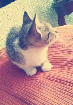 Parece que  he visto un lindo gatito! Cats, Animals, Cute Kittens, Fotografia, Photography, Gatos, Animales, Animaux, Animal
