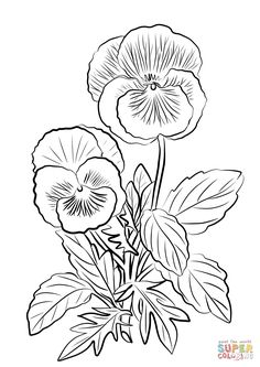 Two Pansies coloring page from Pansy category. Select from 27569 printable crafts of cartoons, nature, animals, Bible and many more. Flower Coloring Pages, Colouring Pages, Coloring Books, Mandala Coloring, Coloring Sheets, Adult Coloring, Bordado Jacobean, Floral Embroidery Patterns, Embroidery Cards