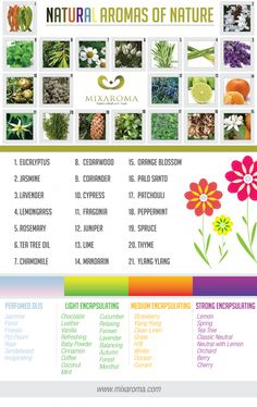 Aromatherapy: Which Natural Aromas Can You Identify?