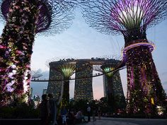 The free light show at Singapore's Gardens by the Bay under the shadow of Marina Bay Sands