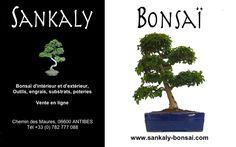 Un très beau Ligustrum Indonésien. Sujet unique de 45 cm de hauteur importé de l'Ile de Java en Indonésie disponible chez www.sankaly-bonsai.com  http://www.sankaly-bonsai.com/achat-vente-acheter-bonsai-interieur-sankaly-bonsai/3128-bonsai-ligustrum-indonesien-45-cm-140901-vente-de-bonsai-sankaly-bonsai.html