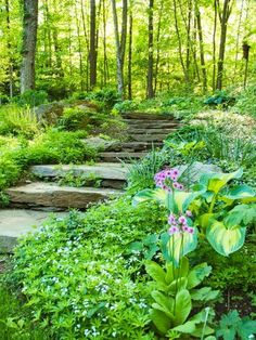A natural stone pathway combined with shade-loving Woodruff ground cover makes the whole space look luscious and soft. A rock staircase can look overbearing and rough in certain gardens, but the Woodruff does a great job of softening the space.