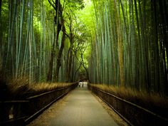 69 Best Bamboo Around The World Images Places Nature Bamboo
