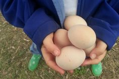 Cheaper chooks - How to reduce the cost of feeding chickens - Little eco footprints Chicken Feed, Chicken Scratch, Chicken Coops, Backyard Farming, Backyard Chickens, Duck Farming, Raising Farm Animals, The Sky Is Falling, Hens
