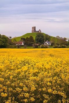*Burrow Mump, Burrowbridge, Taunton Deane, Somerset