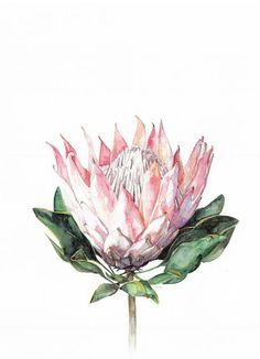 King Protea Art Print by LaurelandPearl on Etsy Protea Art, Protea Flower, Botanical Drawings, Botanical Prints, Art Floral, Watercolor Flowers, Watercolor Paintings, Watercolour, King Protea