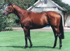 Nijinsky -- Last horse to win the English Triple Crown (1970)