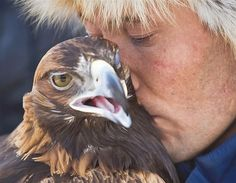 A Kazakh hunter whispers to his tamed golden eagle, Kazakhstan