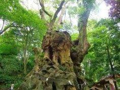 静岡県熱海市西山町にある来宮神社は日本屈指のパワースポットです 境内に足を踏み入れると空気が一変するほど神聖な場所  来宮神社が建てられたのはおよそ1300年前と言われておりその頃から来福縁起の神さまとして熱海の人びとに信仰されていました  本殿裏にある大楠の木はなんと樹齢2000年 天然記念物にも指定されたとても大きな木です 絶対に叶えたい願いごとがあるひとは大きな大楠の木に会いに行きましょう  tags[静岡県]
