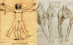 Image result for leo da vinci anatomy