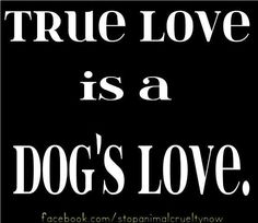 true love is a dog's love ~