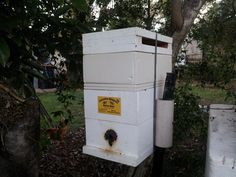 A new honey super section was inserted under the lid of a full hive (see Native Bees / Rochedale Community Garden)