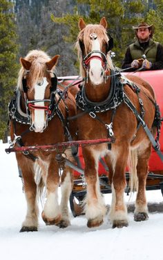 Winter Sleigh Rides Breckenridge Colorado--Find one around IL Pretty Horses, Beautiful Horses, Animals Beautiful, Snowshoe, Rafting, Farm Animals, Cute Animals, Breckenridge Colorado, Clydesdale