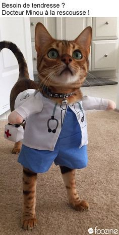 "Cats are are so awesome with amazing personalities and traits, until they're exposed by their owners."" Doctor cat her , How are you feline Funny Animal Memes, Cute Funny Animals, Funny Animal Pictures, Cute Baby Animals, Cat Memes, Funny Dogs, Funny Memes, Funniest Animals, Cute Cats And Kittens"