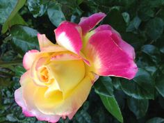 flower inspiration -- yellow with pops of pink