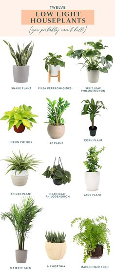 Twelve Low Light Indoor Plants You Probably Can't Kill How's your green thumb? If it could stand to be a little greener, check out our list of twelve low light indoor plants you probably can't kill. Brighten up your space with some houseplants! Indoor Plants Low Light, Best Indoor Plants, Indoor Floor Plants, Easy Care Indoor Plants, Low Light Houseplants, Indoor Plant Stands, Indoor Plant Decor, Indoor Plants Names, Low Light Succulents