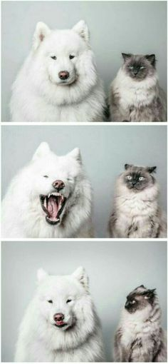 31+ Viral Animals That Will Make You Love Cute Animals | We love cute photos of cats, dogs, horses, pigs, cows, lions, and tigers, and bears… OH MY!