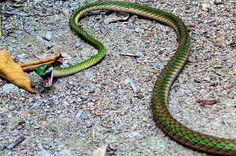 Top 10 des plus beaux serpents du monde