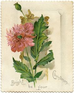 """Christmas Flower Card Image! 