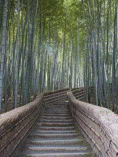 Stairway Through Bamboo Grove Above Adashino Nembutsu-Ji Temple Brent Winebrenner Photographic Print Starting from $24.99