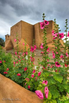 The Hollyhocks are soon to return! San Francisco De Asis Mission hollyhock, Taos, New Mexico #taos #newmexico #flowers