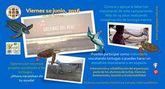 """Los estudiantes de la Especialidad en Ciencias Ambientales, gestión y Sustentabilidad, están realizando la intervención y rehabilitación del Campamento Tortugario """"Golfinas del Real"""" en Tecomán, Colima"""