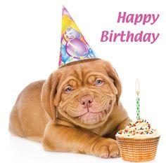 de 7 beste afbeeldingen hond verjaardag hond