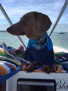 #dogdaysofsummer and #westmarine