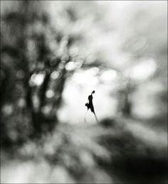 Equinox by Heng Ki Lee.