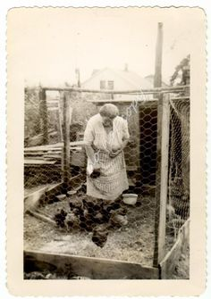 Woman Apron Feeding Backyard Chickens Chicken Wire Fence Coop Vintage Photo…