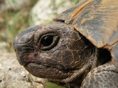 L'hibernation chez la tortue un article de Zoomalia.com