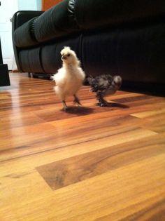 The chicks! Bird, Cats, Animals, Gatos, Animales, Kitty Cats, Animaux, Birds, Cat Breeds
