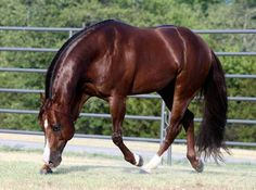FAMOUS STALLIONS - Stoney's - reining horses for sale. famous reining stallions and mares. Professional photographers & Equine web site design - Derby horses and Futurity prospects, show horses for Non Pro, Youth, Rookie or lessons.  AQHA, APHA, NRHA & NR