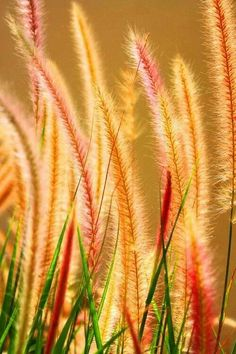 Different! Autumn grasses