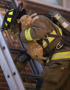 Firefighter in action...cat rescue♥